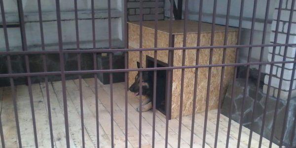 Вольер для крупной собаки - 3