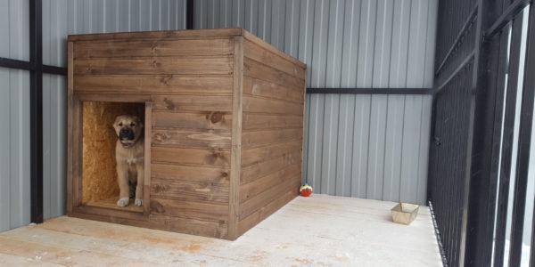 Вольер для крупной собаки зима - 6