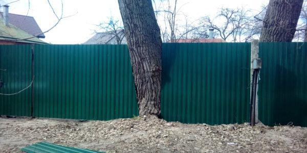 Забор с деревом